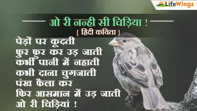sparrow in hindi